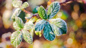 На території Запорізької області очікуються заморозки