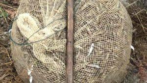 В Запорізькій області викрили браконьєра, який наловив майже 18 тисяч креветок