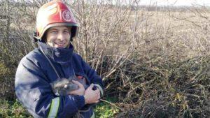 В Запорожской области спасатели вытащили котят из 14-метрового колодца, — ФОТО