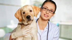 До уваги запоріжцям: КП, яке займається безкоштовною стерилізацією тварин, змінило телефон