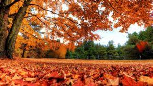 Перші вихідні листопада: чого чекати запоріжцям, — ПРОГНОЗ