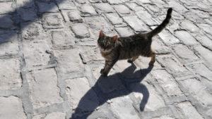 Мешканці Бердянську просять визнати котів частиною екосистеми