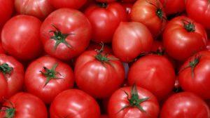 В Украину пытались завести зараженные турецкие помидоры