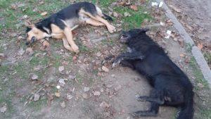 В Запоріжжі активізувалися догхантери: тварини померли на очах у людей, — ФОТО, ВІДЕО (18+)