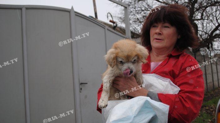 В Запорізькій області підлітки врятували собаку, яка впала в каналізаційний люк