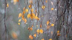 Прогноз погоды для Запорожья и области на выходные
