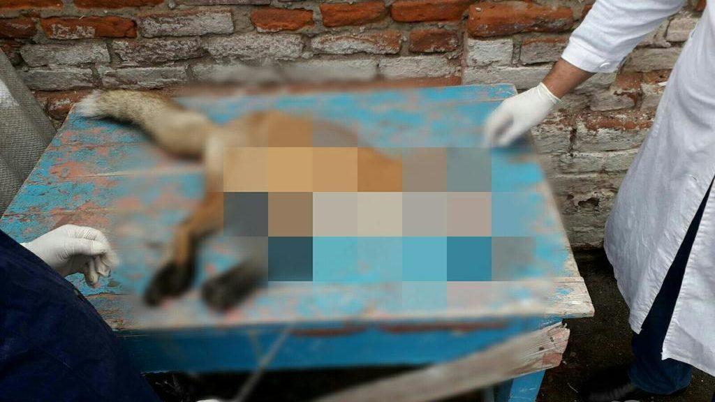 В Запорізькій області на людину напала лисиця, — ФОТО