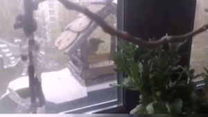 Житель Запорожья вместе с сыном сделал оригинальную кормушку для птиц, — ВИДЕО