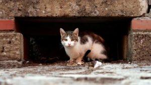 Бердянцы - за: петиция о признании котов частью экосистемы набрала нужное количество подписей