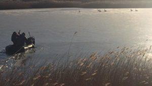 В Запорізькій області рятувальники витягли лебедів з крижаної пастки, — ФОТО