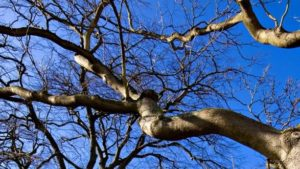 В Запорожье 68-летний пенсионер упал с пятиметрового дерева: его госпитализировали