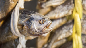 Новый случай ботулизма: запорожец попал в реанимацию после рыбы, купленной на стихийном рынке возле цирка