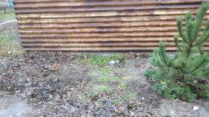 В Запорожской области на Рождество из церкви украли елку