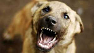 У Запоріжжі на пенсіонерку напав бійцівський пес: жінку госпіталізували