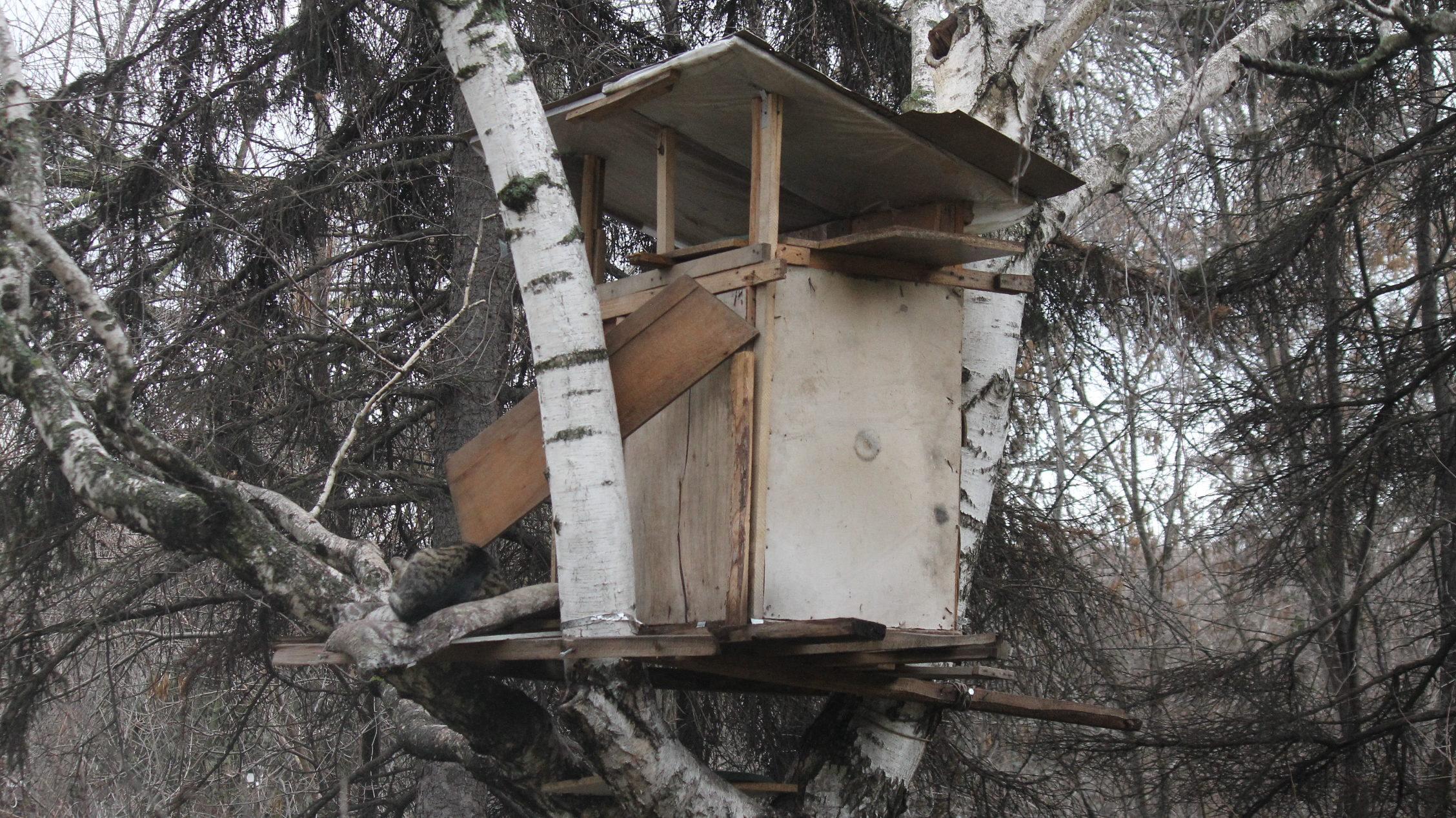 В Запорожье на березе в парке построили двухэтажный домик для котов, – ФОТО