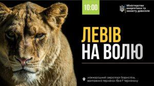 Левів з бердянського зоопарку відправлять до Африки