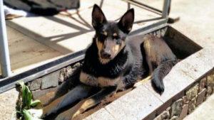 В Запорожье жестоко убили собаку, — ФОТО