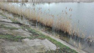 У Запорізькій області у ставку знайшли тіло чоловіка, – ФОТО