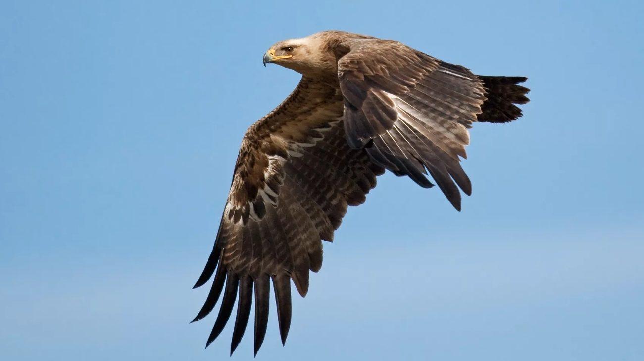 В Запорізькій області браконьєри розстріляли червонокнижного птаха, — ФОТО (18+)