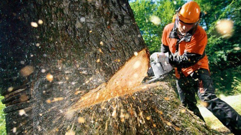 В центре Запорожья для строительства автостоянки магазина срубят 14 деревьев