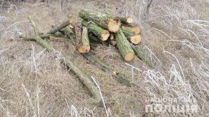 В Запорожской области за сутки шестерых мужчин поймали за незаконной вырубкой деревьев