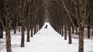 Зима, но не везде: в Запорожье снег выпал избирательно, — ФОТО