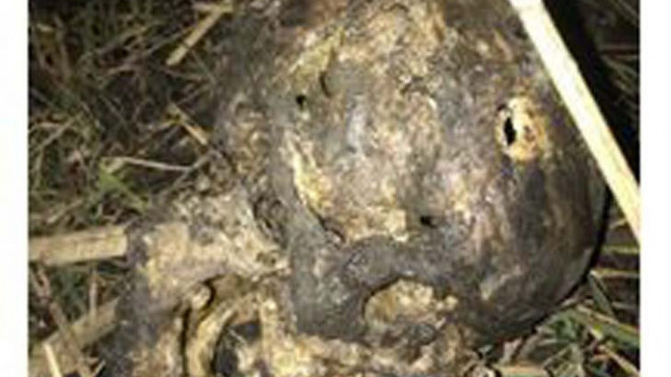 На Запоріжжі знайшли скелетований труп, — ФОТО (18+)