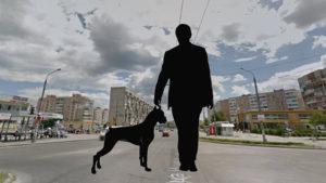 Собаки розумніші за людей? У Запоріжжі показали, хто як переходить дорогу, — ВІДЕО