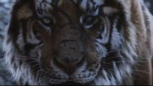 Обитатели зоопарка в Запорожской области озвучили зарубежный фильм, — ВИДЕО
