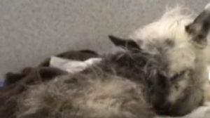 У Запоріжжі жінка врятувала викинуту на залізничні колію собаку, — ВІДЕО