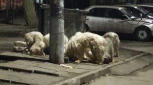 В Запоріжжі хазяйка кинула напризволяще 7 породистих собак, — ФОТО