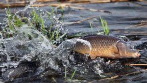 До уваги рибалкам: на Молочному лимані повністю заборонили вилов риби