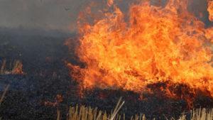 За добу на території Запорізької області згорів гектар природного середовища