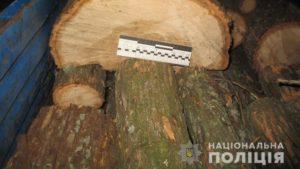 В двух районах Запорожской области выявили факты вырубки лесных массивов