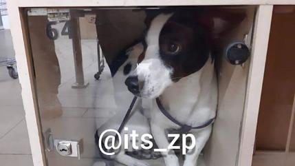 У запорізькому супермаркеті собаку закрили в камері схову, – ФОТО