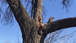 В Запоріжжі негода пошкодила історичне дерево, — ФОТО