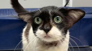 В Запорожской области осудили мужчину, который выбросил кошку в помойку в полиэтилене