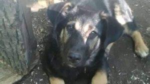 У Запоріжжі розшукують пса бійця АТО, який вибіг з поїзда, — ФОТО