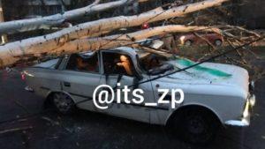 У Запоріжжі тополя впала на «Москвич» з людьми: в мережі опублікували відео з моментом падіння, – ВІДЕО