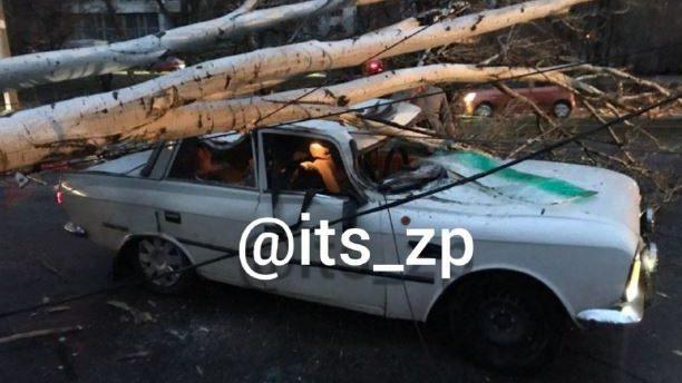 В Запорожье дерево упало на
