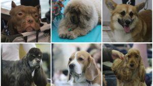 Пудели, мастифы, лабрадоры и питбули: в Запорожье состоялась большая выставка собак, – ФОТОРЕПОРТАЖ