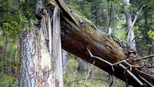 У Запоріжжі на чоловіка впало дерево