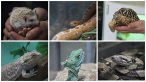 Экзотические змеи, черепахи, жабы и хамелеоны: как в Запорожье проходит большая выставка «Змеиная ферма», – ФОТОРЕПОРТАЖ