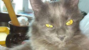 В Запорожье живодер выбросил кошку соседки по подъезду с 6-го этажа, – ФОТО