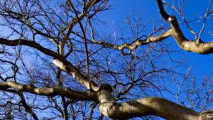 У Запорізькому районі чоловік впав з висоти 4 метрів: він обрізав гілки дерева