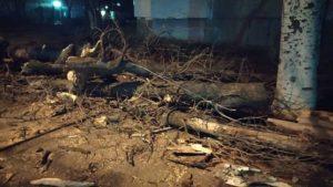 Розбиті машини, повалені дерева та знеструмлені села: як Запорізька область перенесла ураган