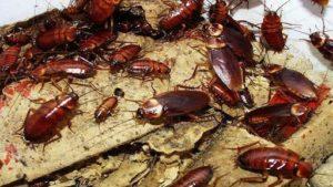 В запорожской квартире устроили ферму экзотических тараканов: насекомые разбегаются по всему дому, соседи подают в суд из-за вони, – ВИДЕО