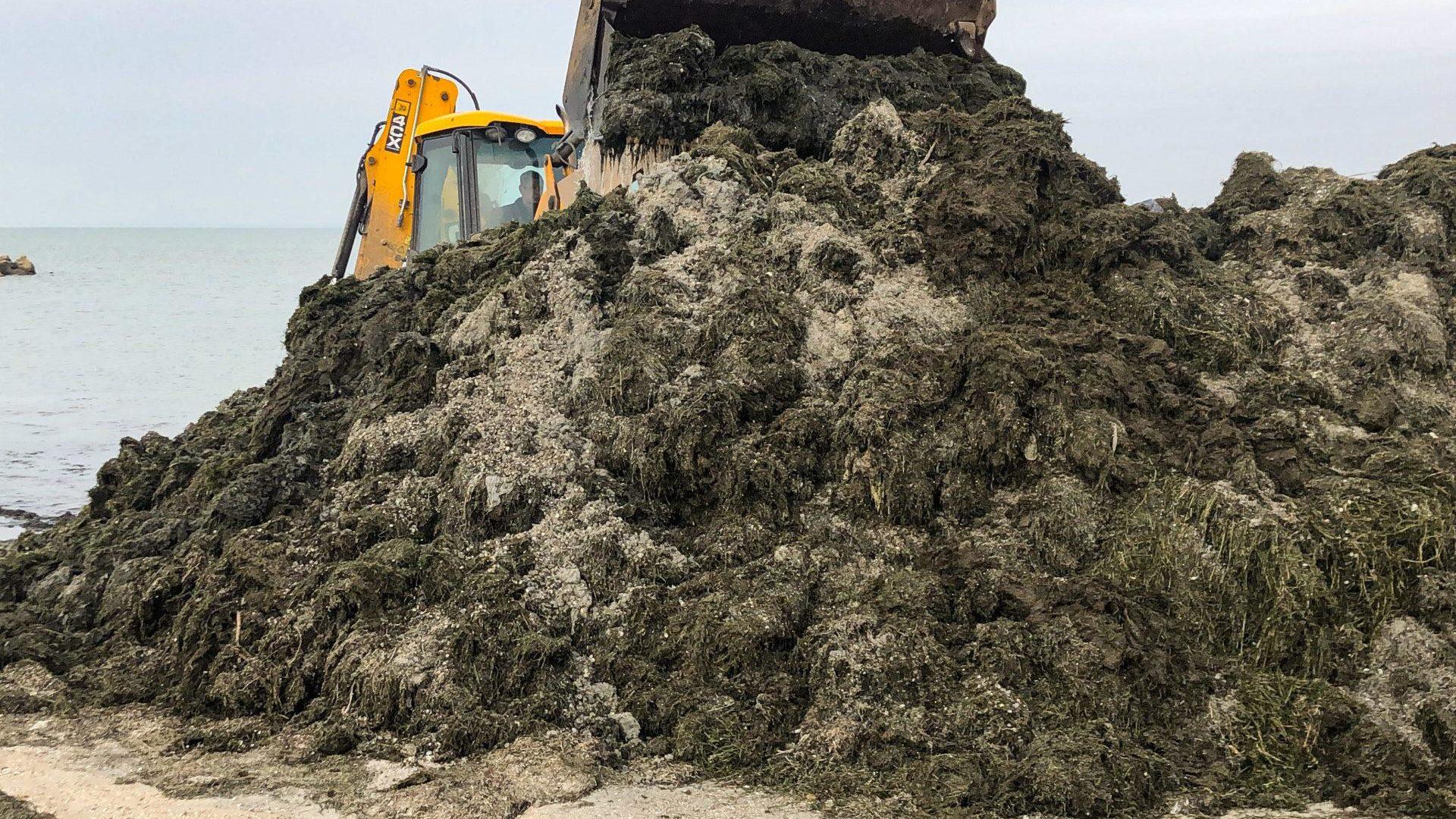 Побережье в Бердянске покрыто тоннами водорослей, — ФОТО