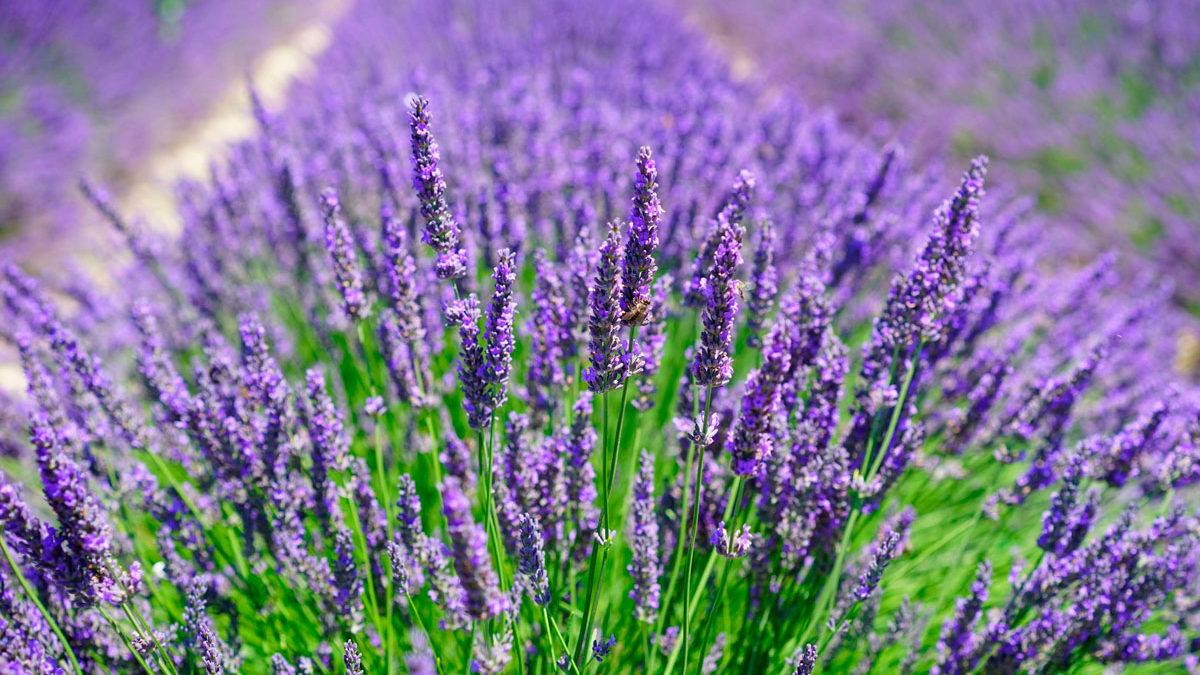 В Запоріжжі провулку дадуть назву на честь квітки