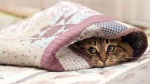 Останній день тижня принесе в Запорізьку область похолодання
